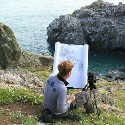 Wallbank Skomer drawing guillemot